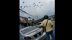 道路で鳩を一網打尽にしちゃうストリート鳩ハンターwwww