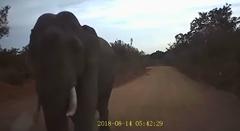 突然ゾウに車を壊されちゃうビックリ動画