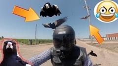 鳥さん 走行中のライダーに攻撃しまくるの巻