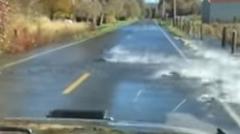 道路を横断する鮭が発見されるwwww