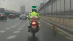 高速道路に迷い込んだ犬を誘導するハートフル白バイ隊員