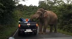 野生のゾウに荷台を荒らされちゃう動画