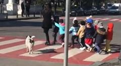 横断歩道を渡る子供達の安全に目を光らせるワンちゃん